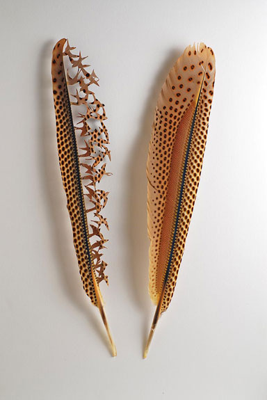 Great Argus pheasant wing feathers.