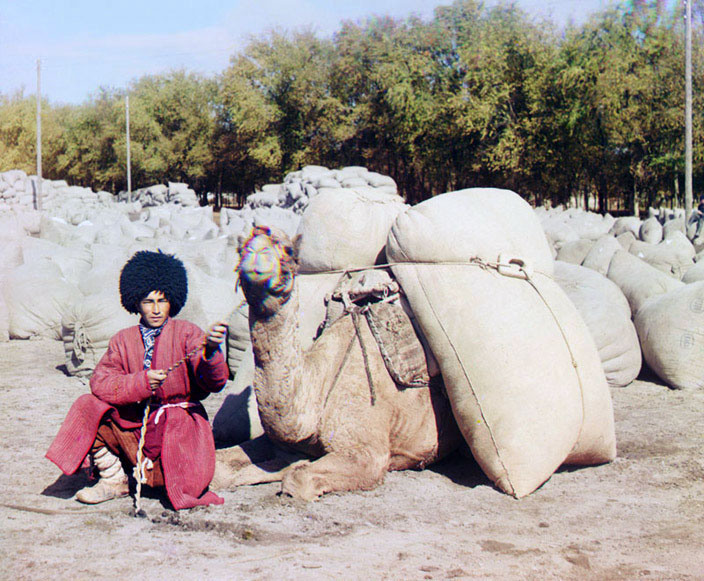 Turkmenistan man with camel, ca. 1907-1915.