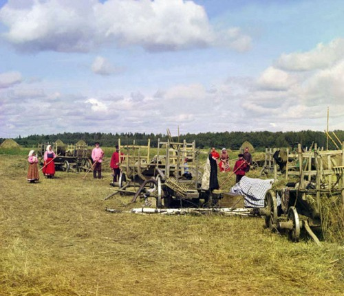 Hay gathering, 1909.