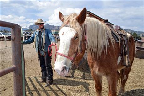 Joker, a Belgian draft horse, awaits a tour at Sombrero Ranches.  Please pray for him!