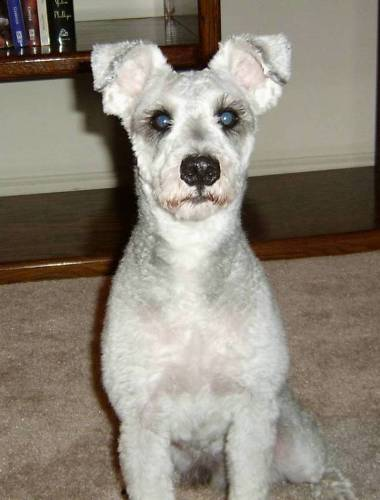 Wolfgang in March of 2004.  Behind those sweet, glassy eyes lay eons of canine evolution and aggression.